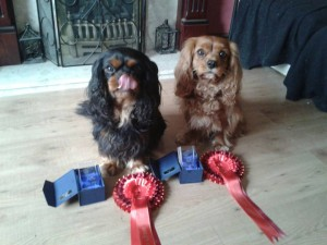 Jet and Bailey with Wins 2013